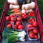 Am Braigh Farm - Mixed Vegetables