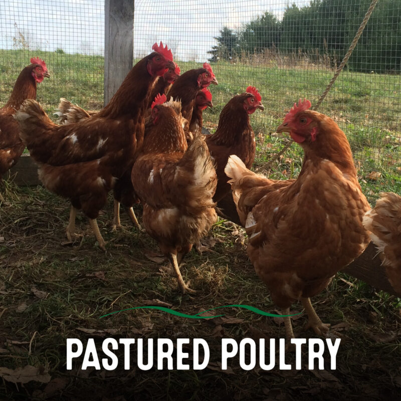 Am Braigh Pastured Poultry